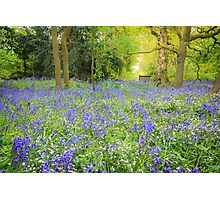 Dorothy Clive Garden, Bluebells Photographic Print