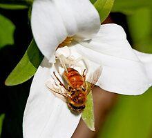 Size Doesn't Matter Honey B 1 by DigitallyStill