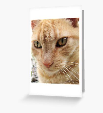 Neighborhood Cat 4 Greeting Card