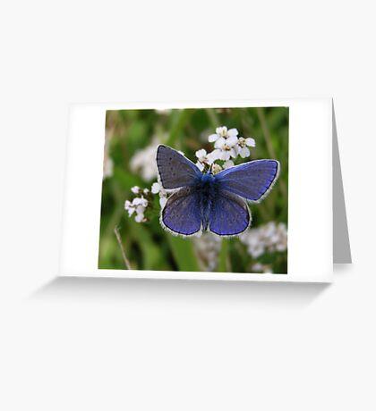 Blue Blue Boy Greeting Card