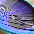 Peacock by zahnartz
