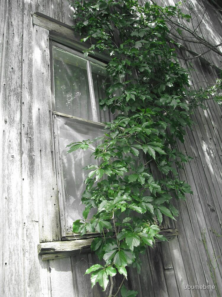 Come to my window by ubumebme