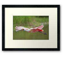 Pink Cruiser Framed Print