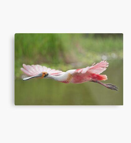 Pink Cruiser Metal Print