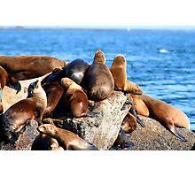 Sea Lions sunning at Monterey  Photographic Print