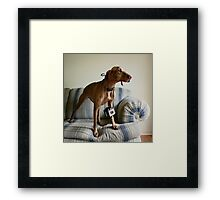 She Thinks She's People Framed Print