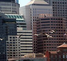 Pelicans in the Cityscape  by Peggy Berger