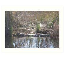 Gator in the Path Art Print