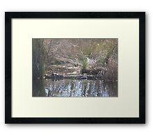 Gator in the Path Framed Print
