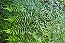 Ferns by Larry  Grayam