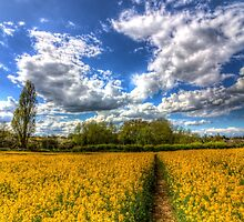 The Farm Footpath by DavidHornchurch