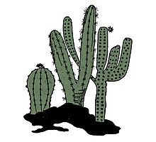 Cactus Vintage Art Photographic Print