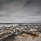 Ocean Driftwood by Doug Scott