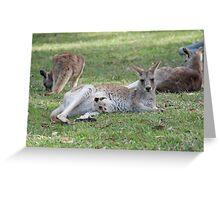 Eastern Grey Kangaroos, NSW, Australia Greeting Card