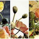 Poppys by K.D. Hemi