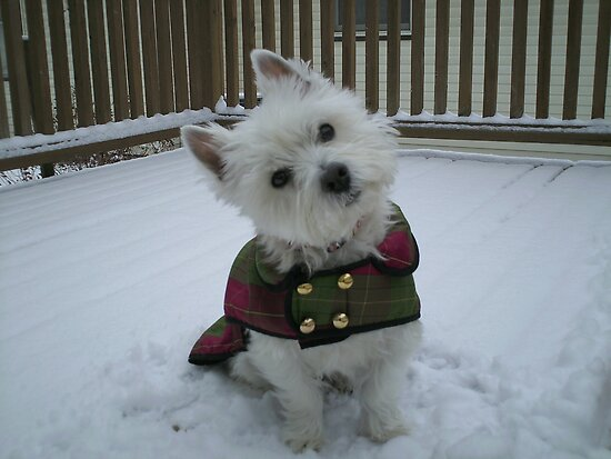 Winter Winnie by reindeerfamily