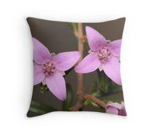Two Boronia Flowers Throw Pillow
