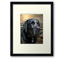 The Lifeguard Framed Print