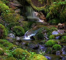 Hidden Brook - Olympic Mountains National Park by John Absher