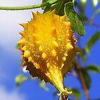Prickly Yellow Pod by Danceintherain