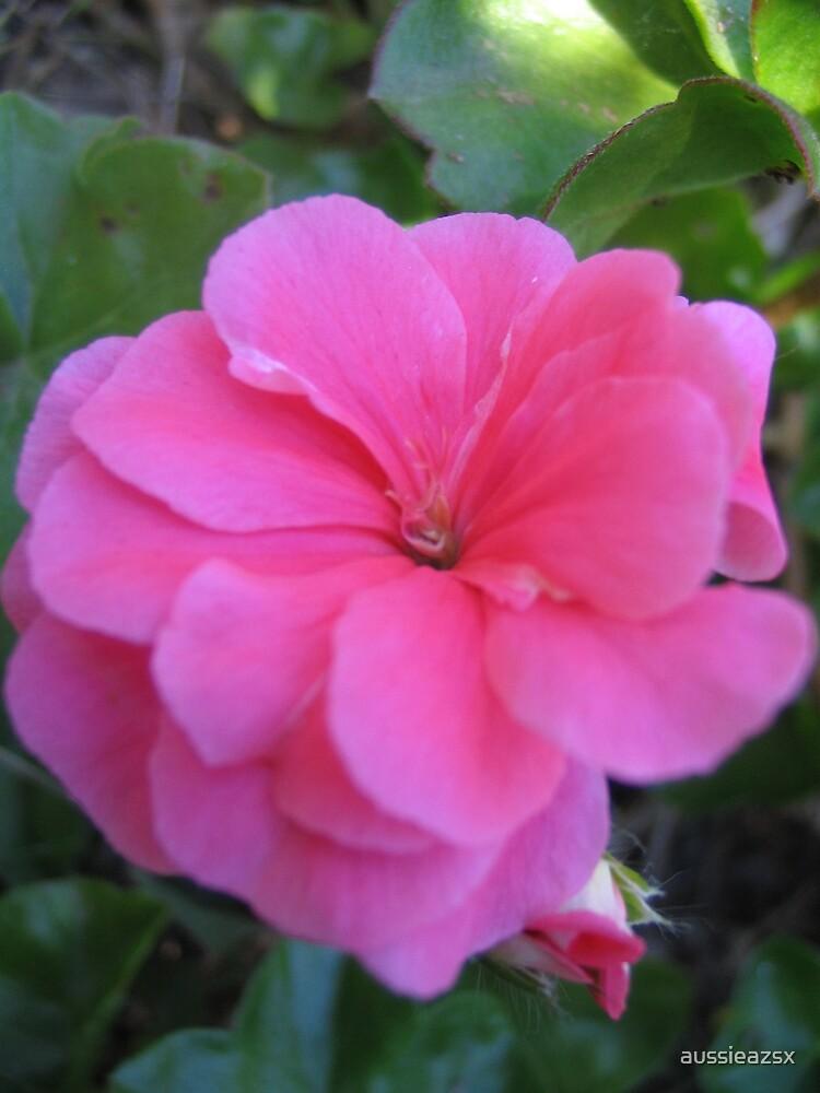 pretty in pink by aussieazsx