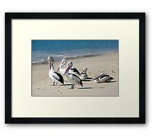 Pelicans Framed Print