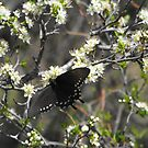 Butterfly at LBJ National Historical Park by Susan Russell