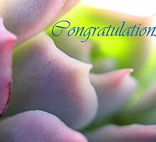 Congratulations - Soft Mauve Succulent Greeting Card by Susan Brown