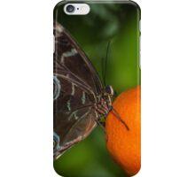 Butterfly on an Orange iPhone Case/Skin
