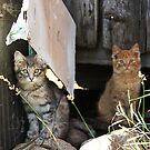 Siblings! by katievphotos