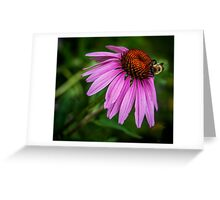 Bumblebee on cone flower Greeting Card