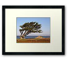 Coastal Cypress Framed Print