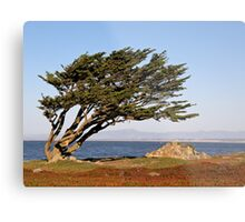 Coastal Cypress Metal Print