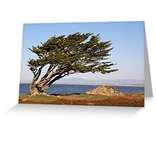 Coastal Cypress Greeting Card
