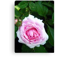 Rose above, Rose Below... Canvas Print