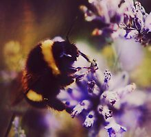 Lavender bumblebee by Indea Vanmerllin