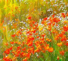 Poppy Field Art by Doug Scott