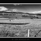 yarra valley panorama  by leabrigitte69