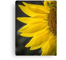 Beautiful Sunflower Closeup Canvas Print
