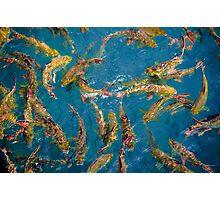 Fancy carp fish Photographic Print