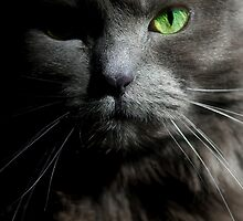 Emerald Eyes by Joann Vitali