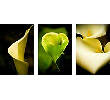 Lily triptych Photographic Print