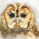 Tawny Owl by Anthony Hedger Photography