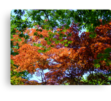Natural Canopy in a Japanese Garden Canvas Print