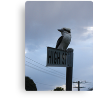Kooka on High Canvas Print
