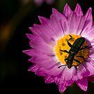 Beetlejuice by Naomi Brooks