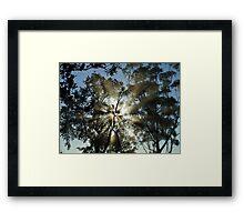 """""""Rays of Sunshine"""" Framed Print"""