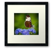 Butterfly on green background and the grass Framed Print