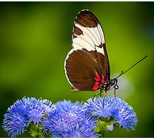 Butterfly on green background and the grass Photographic Print