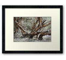 Swamp Paperbark Tree Framed Print